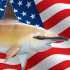 Results of seven US Shark Tournaments in New England and adjacent states, June – August 2014