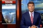 Great white shark attacks boat