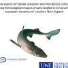 Defining the ecological impacts of spiny dogfish in New England