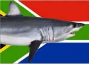 South Africa: Shark incident at Cape St Francis