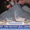 First two-headed bull shark found
