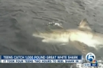 Teens catch great white shark off South Florida