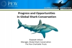 Progress and Opportunities in Global Shark Conservation