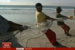 BBC News – Great White Shark net trials in South Africa