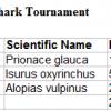 Star Island Shark Tournament 2013