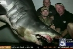 1,323 lbs Mako Shark caught off Southern California