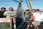 Snug Harbor Shark Tournament 2013
