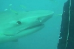 Shark deterrent wetsuit tested on wild sharks