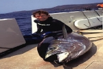 Australia: Great White Shark Sentenced to Death