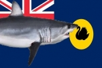 WA Drumlines: EPA recommends against extending shark catch and kill policy