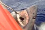 Rare Footage of Longfin Mako Shark – Isurus paucus