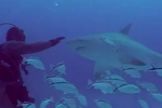Sharks and Mantas – Marine Life Conservation & Eco-Tourism