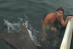 Tiger shark attack near miss off Gold Coast