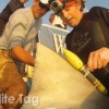 Video abstract: Stress Physiology of Sharks in Fishing