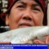 Shark Processing  in Indramayu, Indonesia