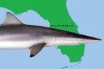 Kentucky Teen Recovering From Shark Bite