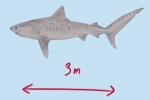 Explained: Shark Control Measures in Australia