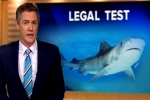 9 News Perth – WA Shark Court