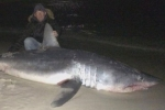 805 pound mako shark caught on Panhandle beach