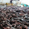Legalized Shark Finning in Costa Rica