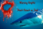 Mako Shark attacks Seal off Portland, Australia