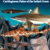 FAO sheds light on deep-sea sharks