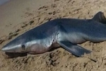 Noteworthy Shark Records from Mediterranean and European Waters – September 2013 to April 2014