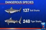 7News: Qld shark control program set for overhaul