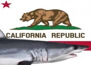 Fatal Shark Attack Incident in Santa Cruz County