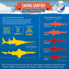 Endangered Sawfish: IUCN Strategy Released as Global Protection Proposed