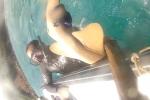 Video: Speared Nurse Shark Bites Snorkeler