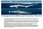 Disappearing Silky and Thresher Sharks