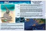 Hawaii: Tiger Shark Biology and Movement