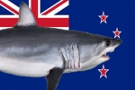 NZ: Decade of great white shark research nears end