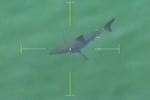 Great White Shark Sighting off Duxbury Coast