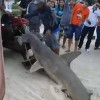 Brazil: Fine imposed for mistreatment of hammerhead shark
