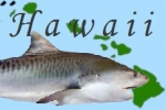 Hawaii: Boat Crewman Charged for Feeding Sharks