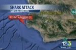 KEYT News: Fishermen Come to Rescue After Shark Damages Kayaks