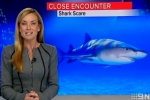 9News: Shark scare after close encounter in Dunsborough WA