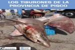Guide: Sharks of the Pisco Province, Peru
