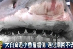TTV News: Great white shark found beached in Taiwan