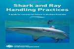 Guide: Shark and Ray Handling Practices