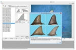 New shark fin identification tool released
