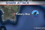 9 News Adelaide: Shark Attack in Fishery Bay SA