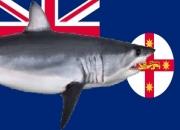Man dies in suspected shark attack – Kingscliff
