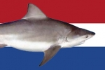 New Shark Sanctuary In The Caribbean Netherlands