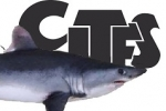 CITES traceability pilot project presented at global sharks meeting in Costa Rica