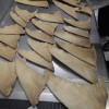Suspected Hammerhead Shark Fins Seized By Hong Kong Customs