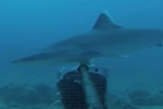 Al Jazeera: Saving the world's shark population