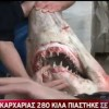 Video: Smalltooth sandtiger shark caught in Greece